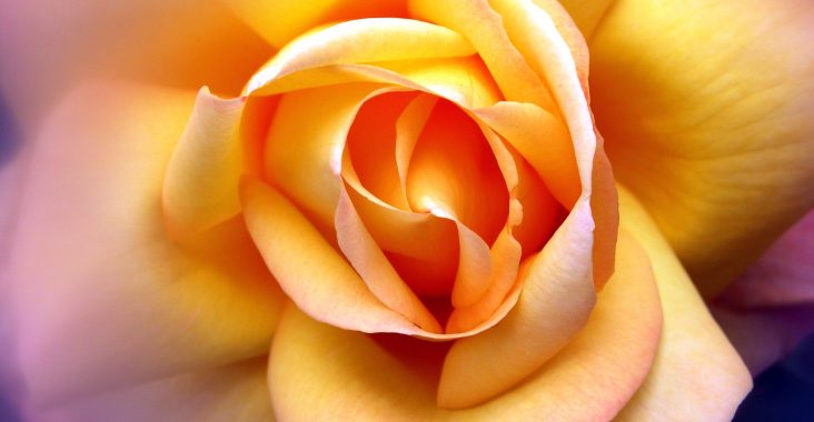 fond_ecran_wallpaper_fleurs_0106